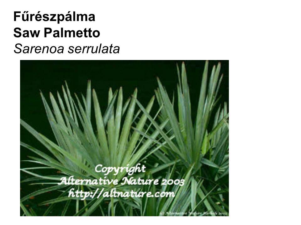 Saw Palmetto Sarenoa serrulata