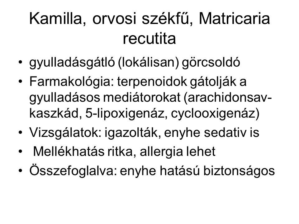 Kamilla, orvosi székfű, Matricaria recutita