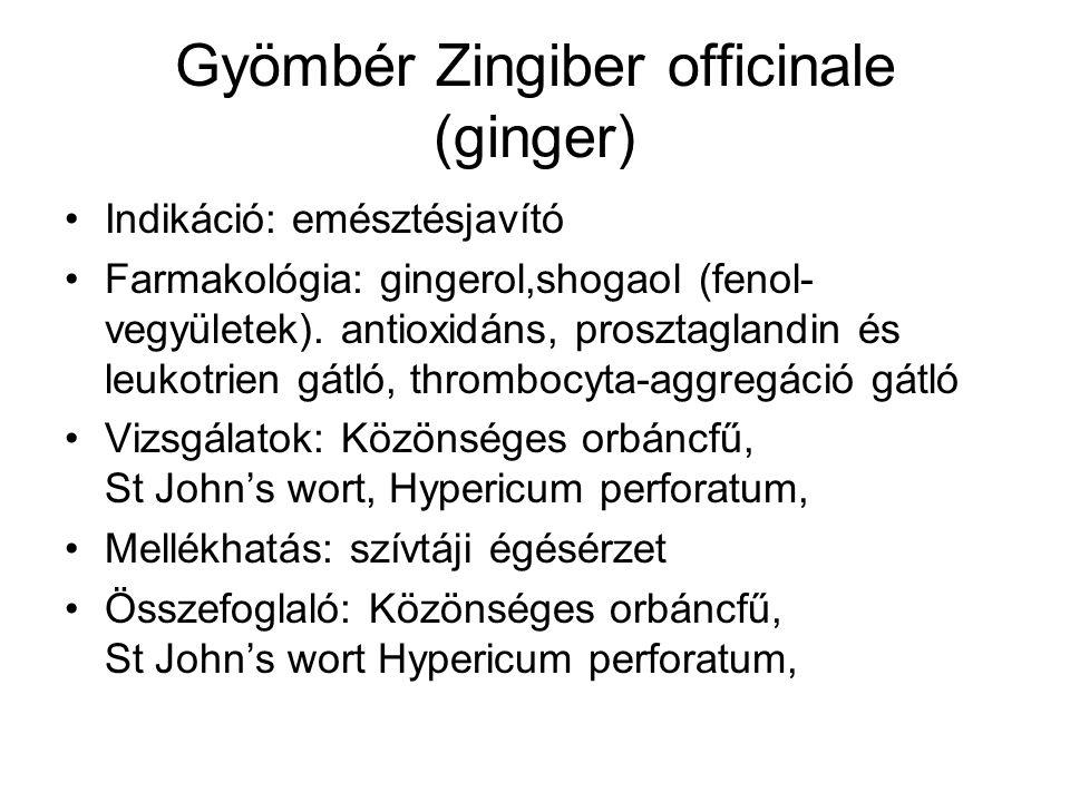 Gyömbér Zingiber officinale (ginger)
