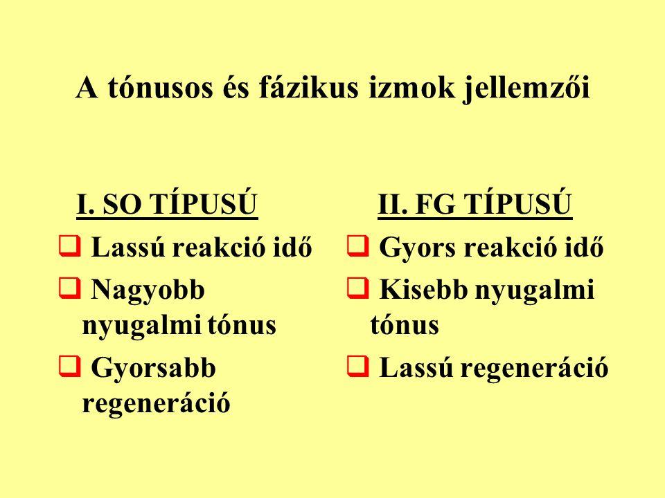 A tónusos és fázikus izmok jellemzői