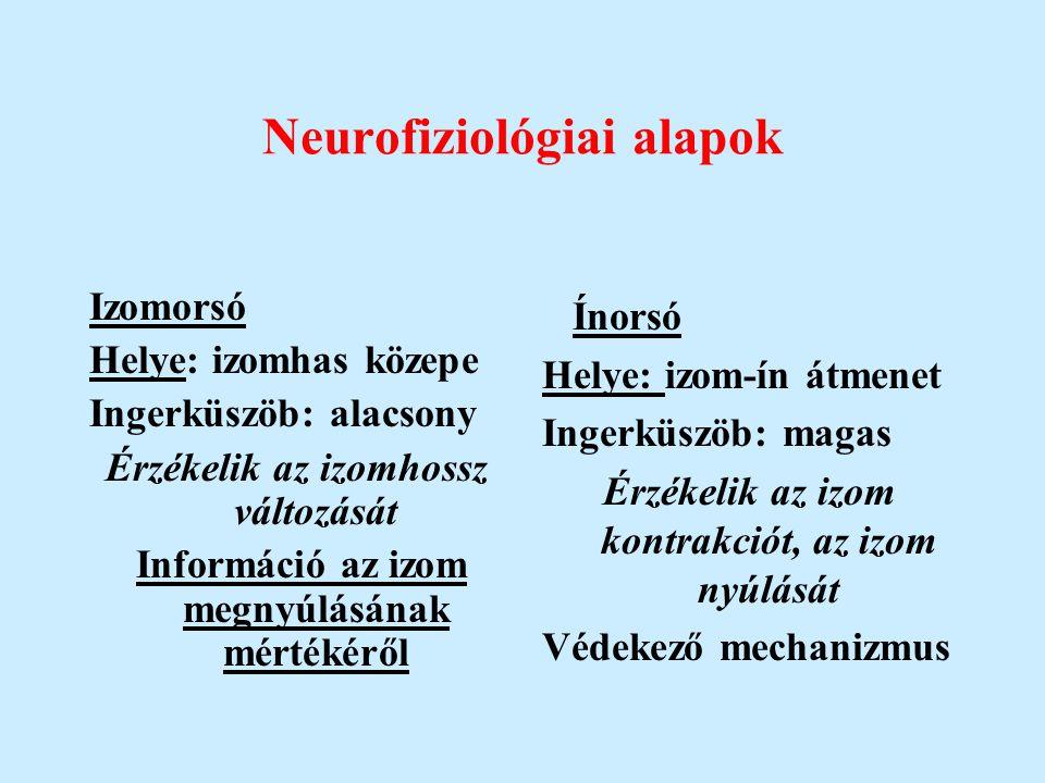 Neurofiziológiai alapok