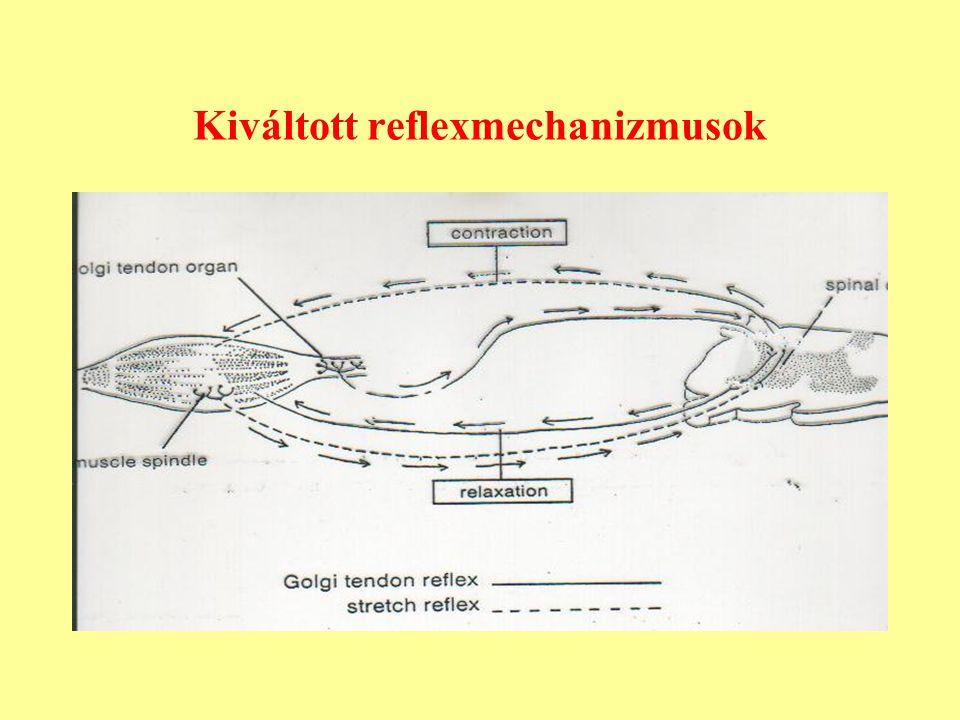 Kiváltott reflexmechanizmusok