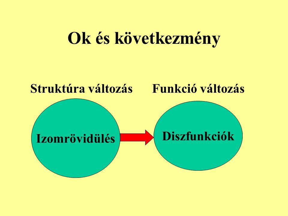 Ok és következmény Izomrövidülés Diszfunkciók Struktúra változás