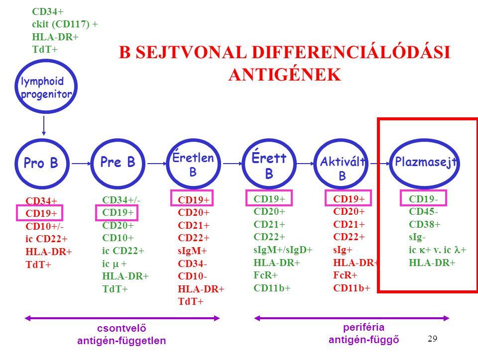 B SEJTVONAL DIFFERENCIÁLÓDÁSI ANTIGÉNEK