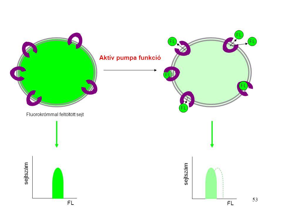 FL Aktív pumpa funkció Fluorokrómmal feltöltött sejt sejtszám