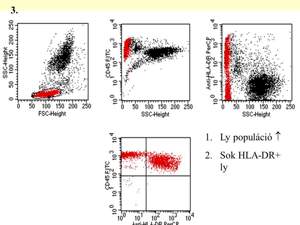 3. Ly populáció  Sok HLA-DR+ ly