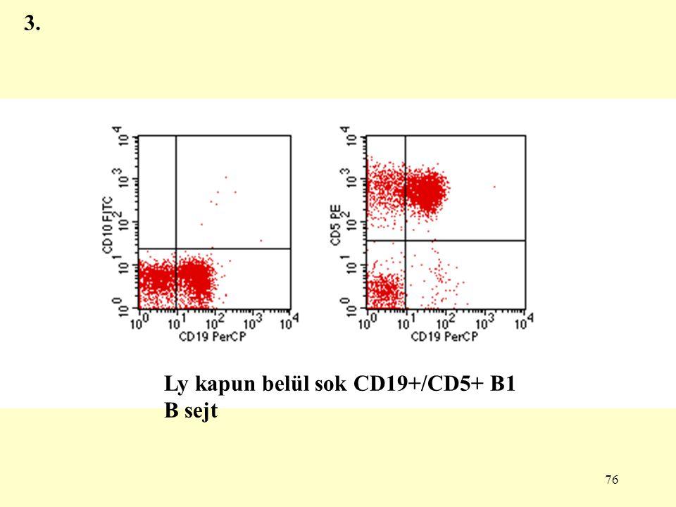 3. Ly kapun belül sok CD19+/CD5+ B1 B sejt