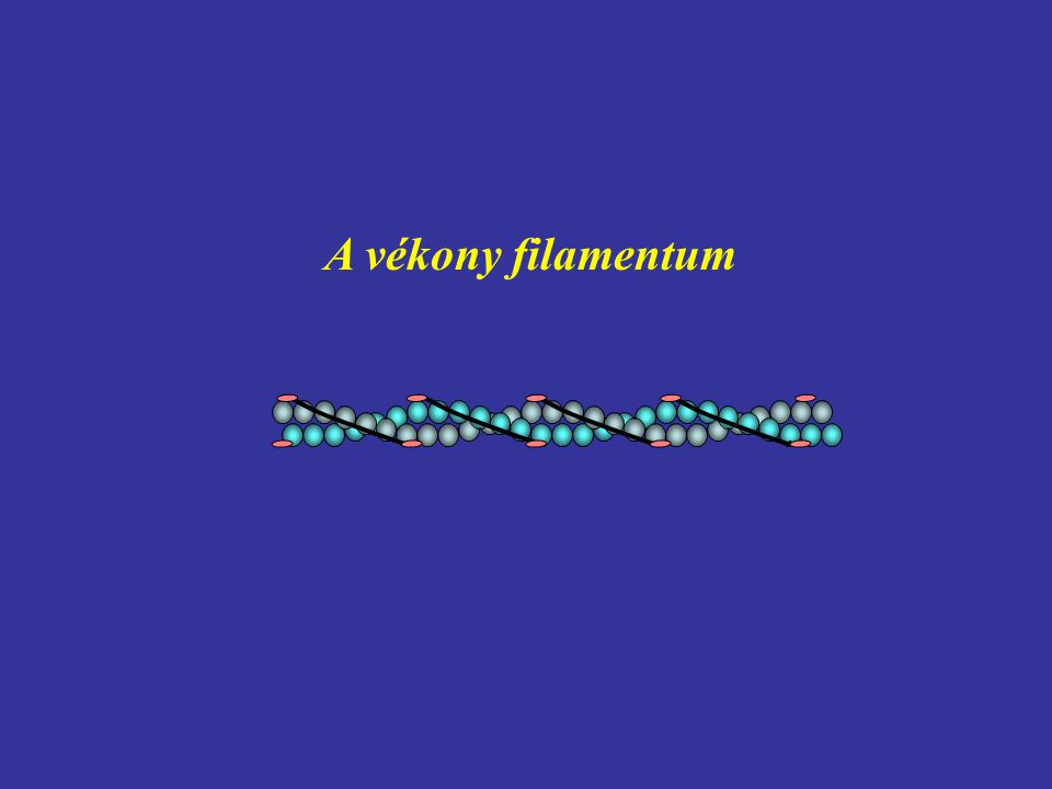 A vékony filamentum