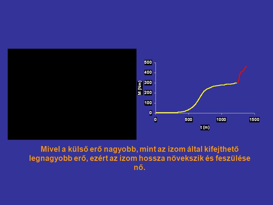 Mivel a külső erő nagyobb, mint az izom által kifejthető legnagyobb erő, ezért az izom hossza növekszik és feszülése nő.