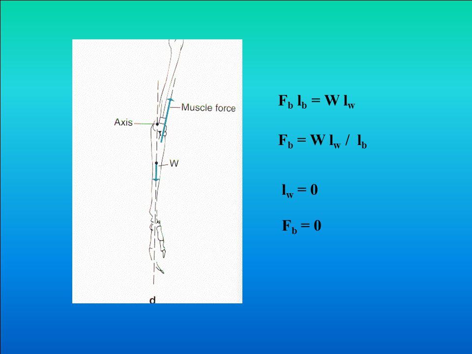 Fb lb = W lw Fb = W lw / lb lw = 0 Fb = 0