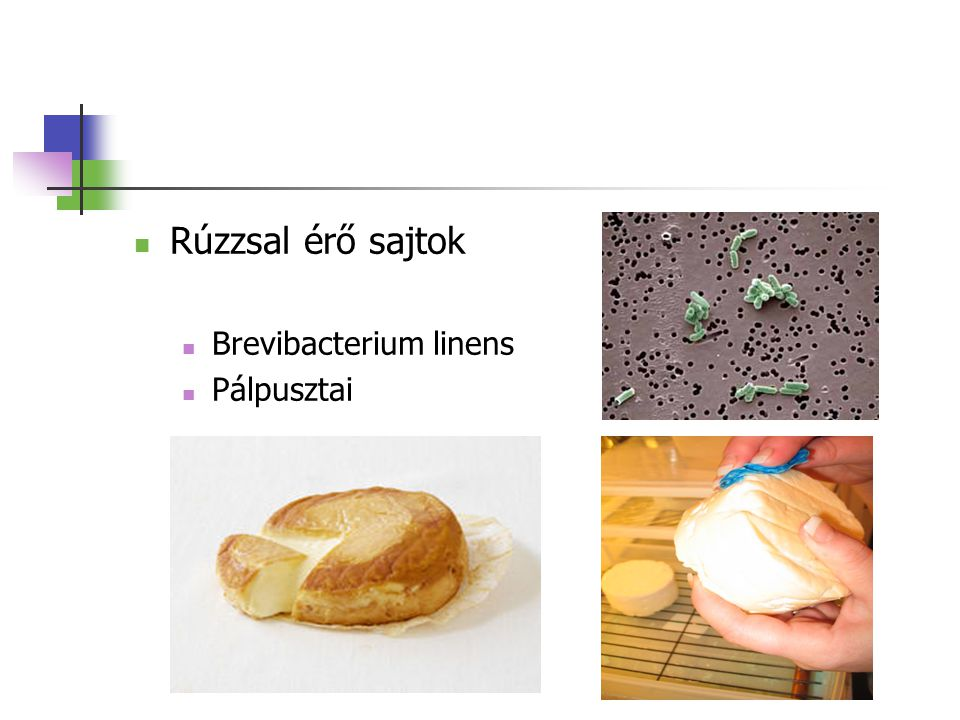 Rúzzsal érő sajtok Brevibacterium linens Pálpusztai