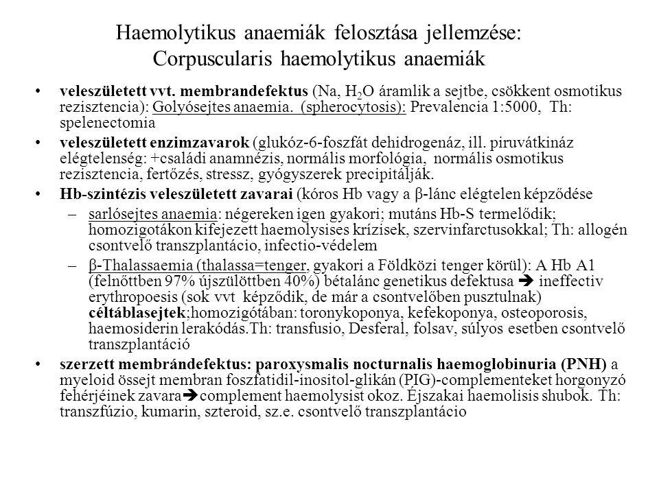 Haemolytikus anaemiák felosztása jellemzése: Corpuscularis haemolytikus anaemiák