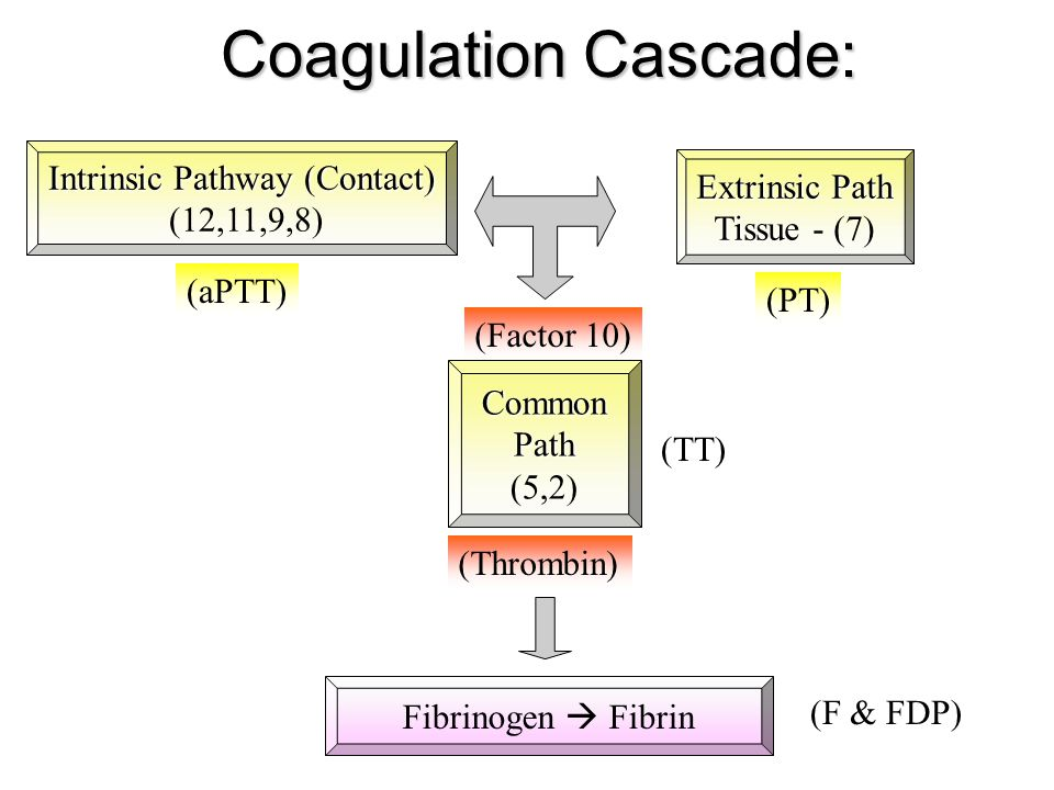 Intrinsic Pathway (Contact)
