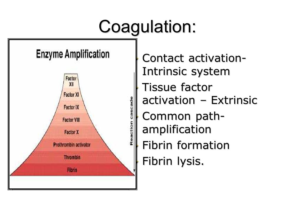 Coagulation: Contact activation-Intrinsic system