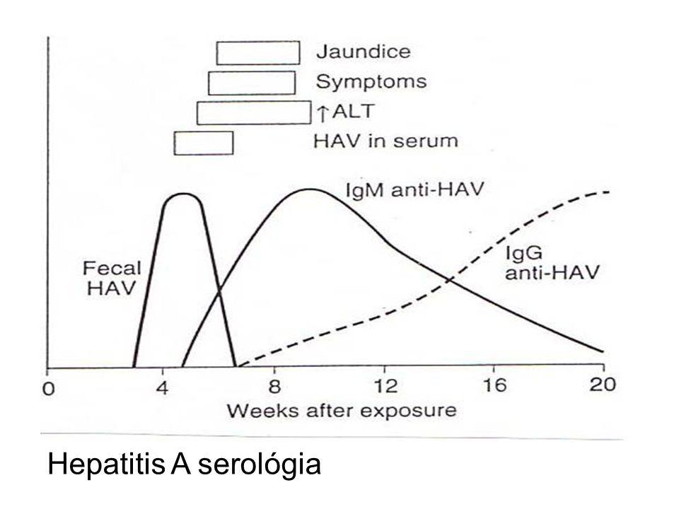 Hepatitis A serológia