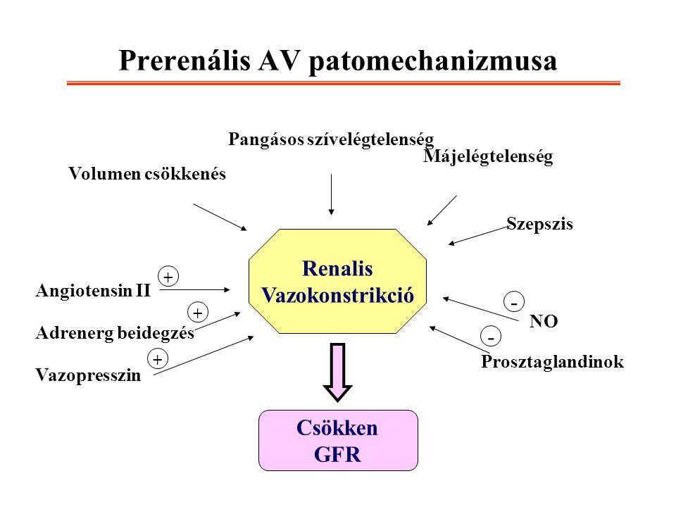 Prerenális AV patomechanizmusa