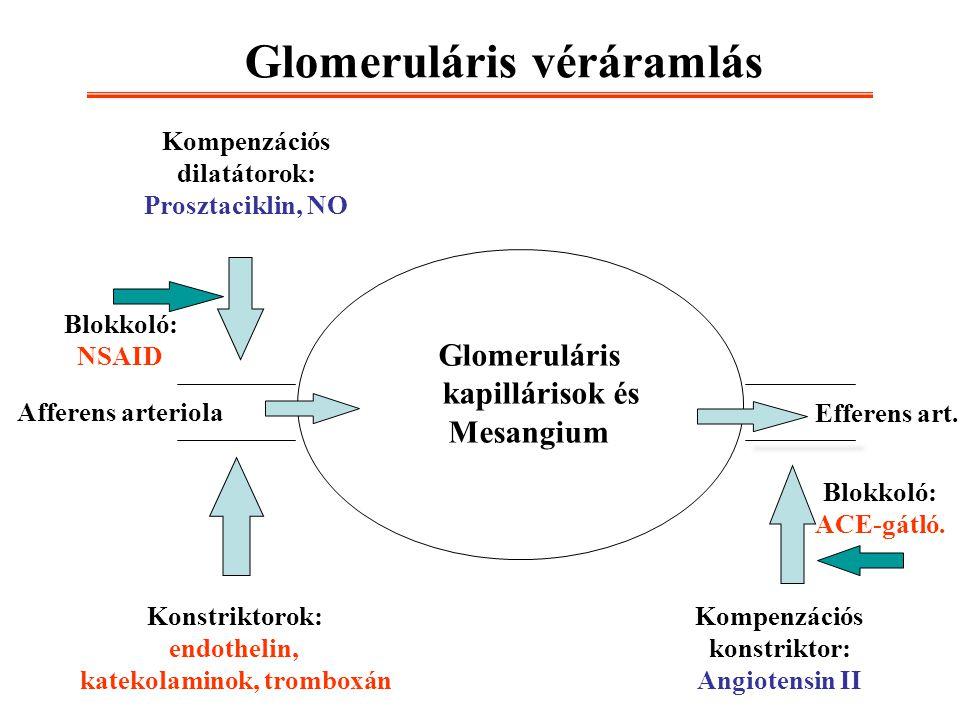 Glomeruláris véráramlás