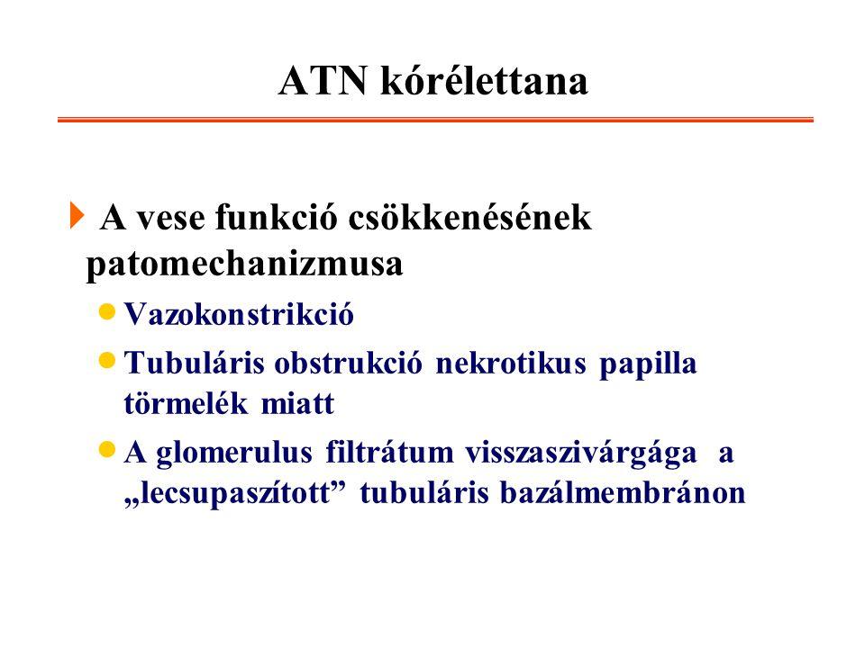 ATN kórélettana A vese funkció csökkenésének patomechanizmusa