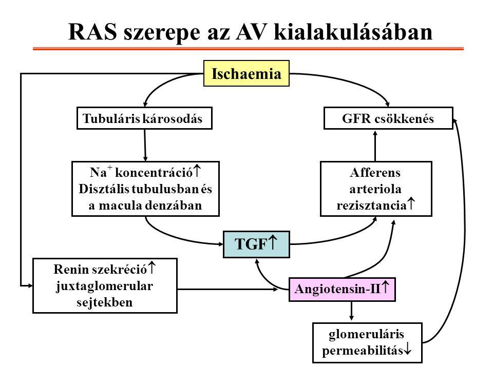 RAS szerepe az AV kialakulásában