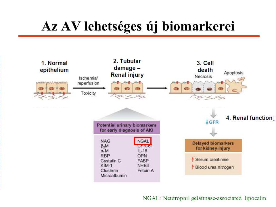 Az AV lehetséges új biomarkerei