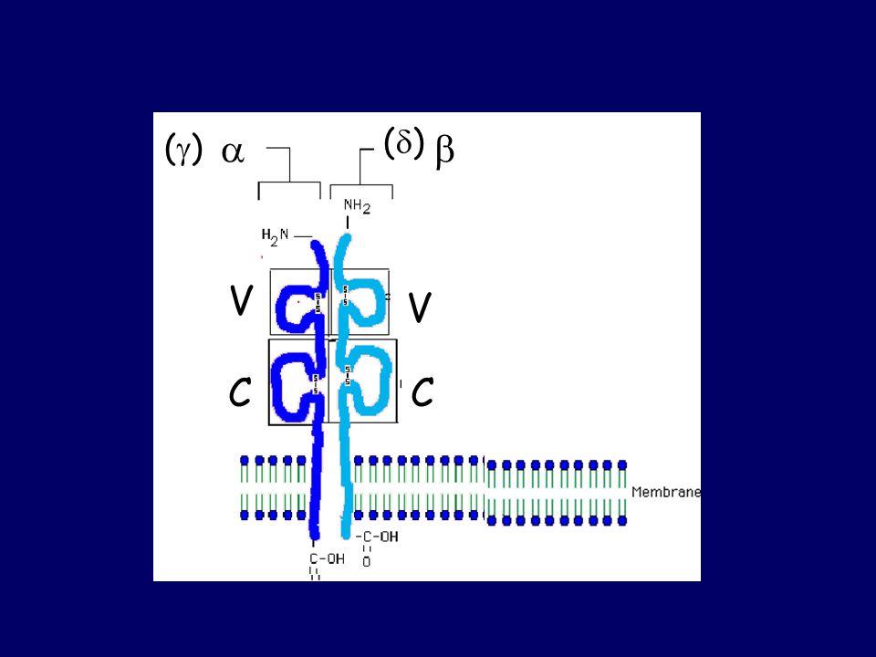  () ()  V C