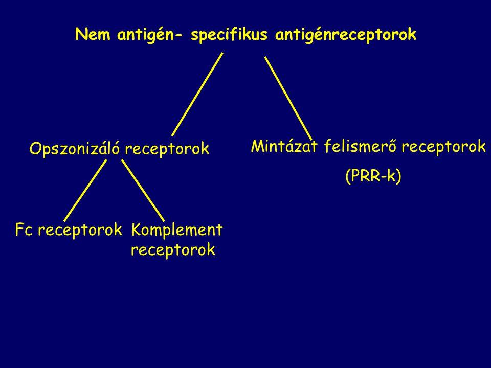 Nem antigén- specifikus antigénreceptorok