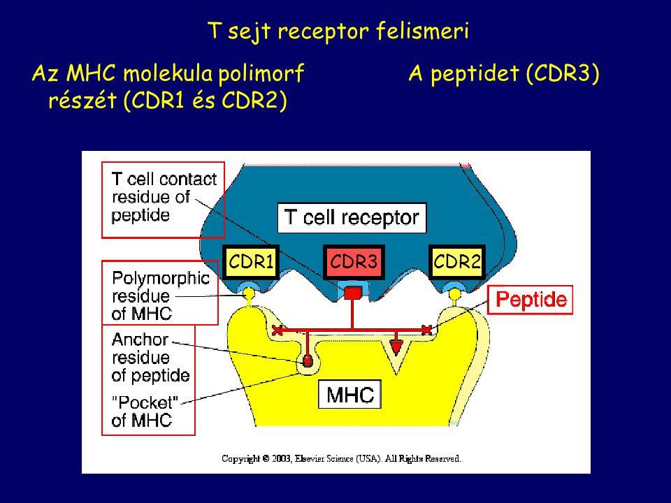 T sejt receptor felismeri