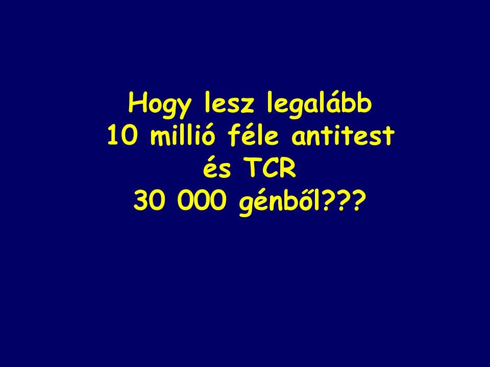 Hogy lesz legalább 10 millió féle antitest és TCR 30 000 génből