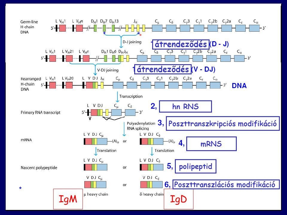 Poszttranszkripciós modifikáció Poszttranszlációs modifikáció