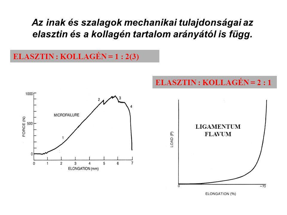 Az inak és szalagok mechanikai tulajdonságai az elasztin és a kollagén tartalom arányától is függ.