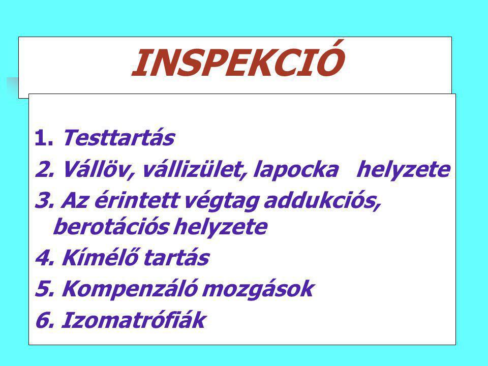 INSPEKCIÓ 1. Testtartás 2. Vállöv, vállizület, lapocka helyzete