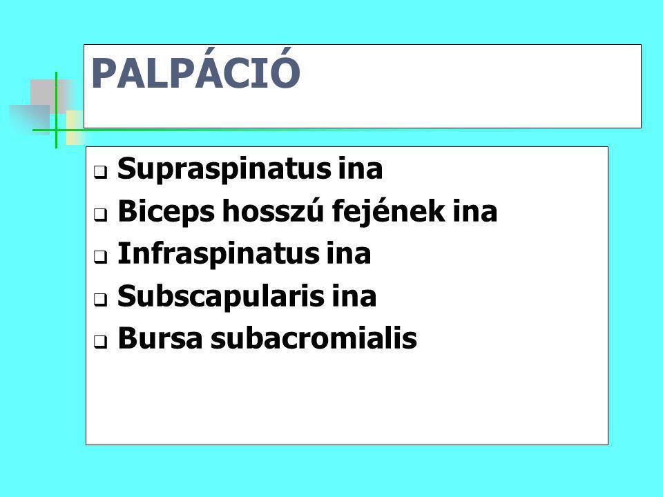 PALPÁCIÓ Supraspinatus ina Biceps hosszú fejének ina Infraspinatus ina