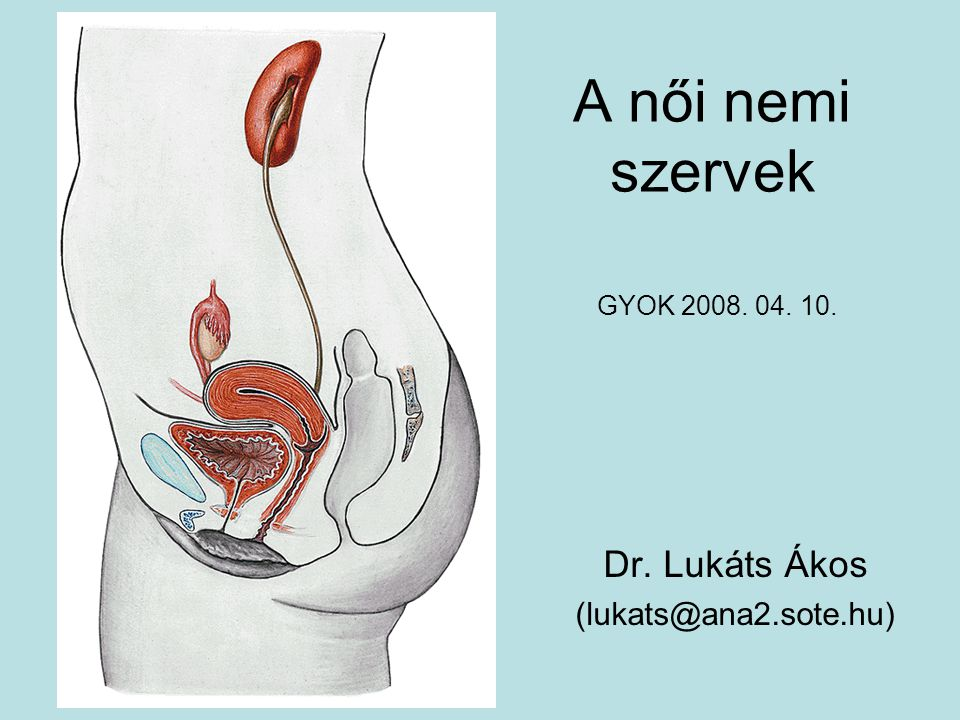 Dr. Lukáts Ákos (lukats@ana2.sote.hu)