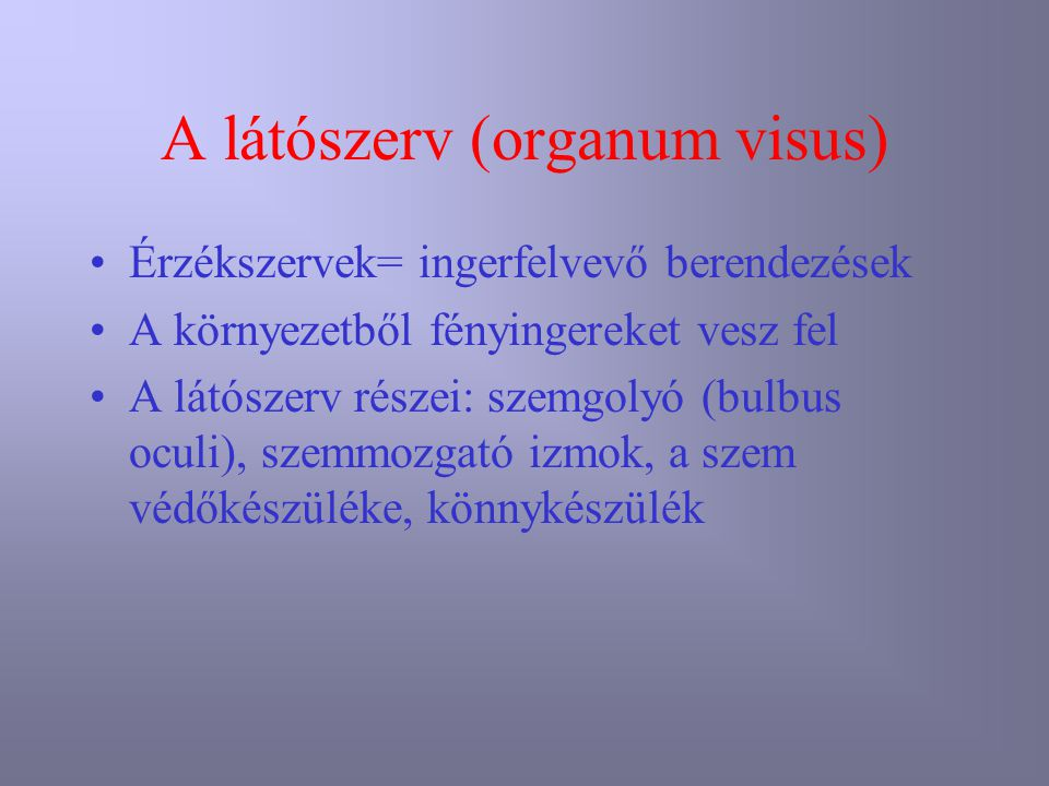 A látószerv (organum visus)