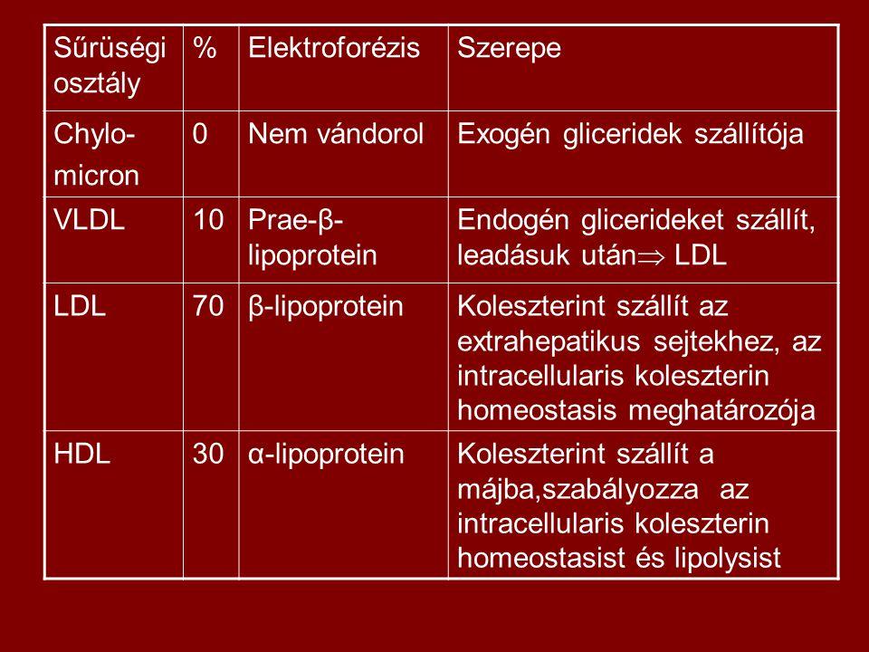 Sűrüségi osztály % Elektroforézis. Szerepe. Chylo- micron. Nem vándorol. Exogén gliceridek szállítója.