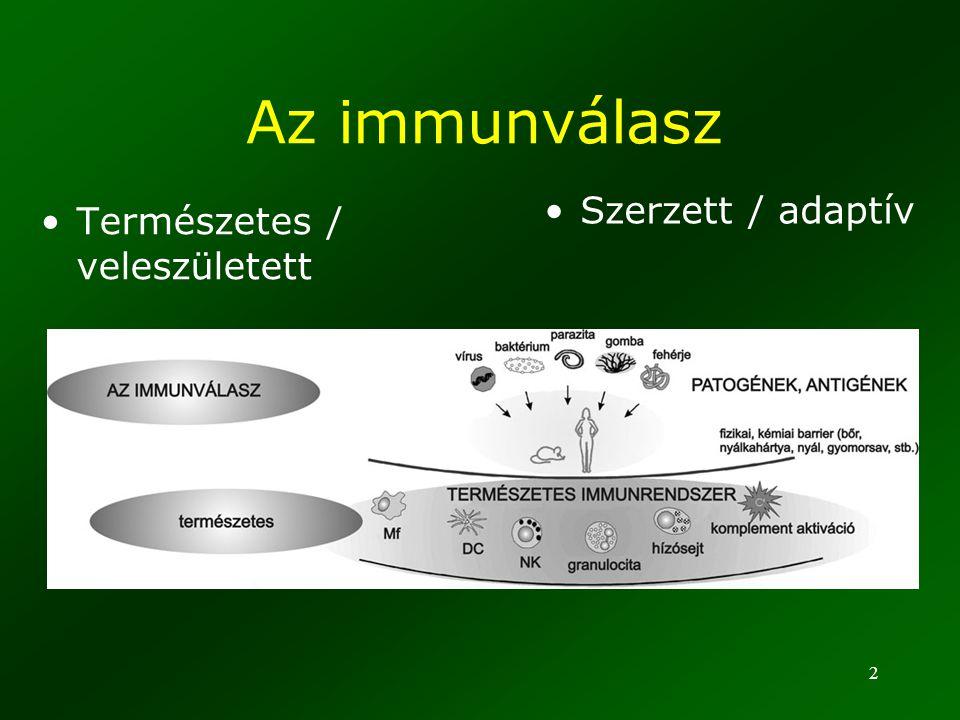 Az immunválasz Szerzett / adaptív Természetes / veleszületett