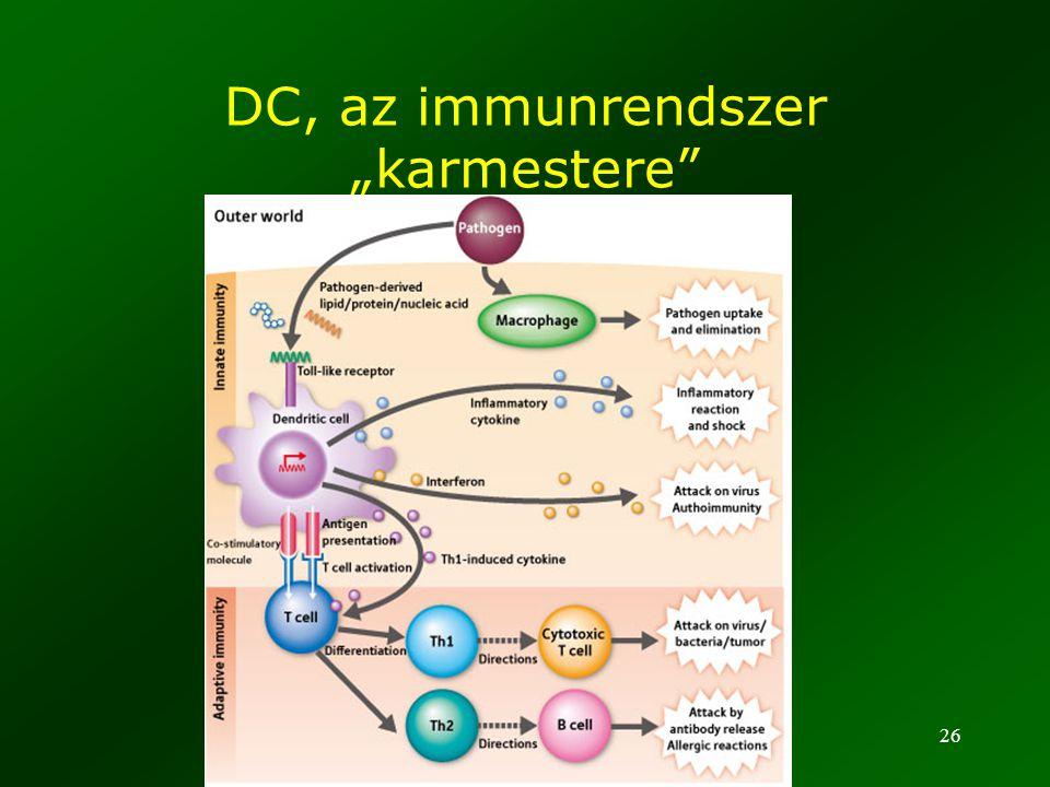 """DC, az immunrendszer """"karmestere"""