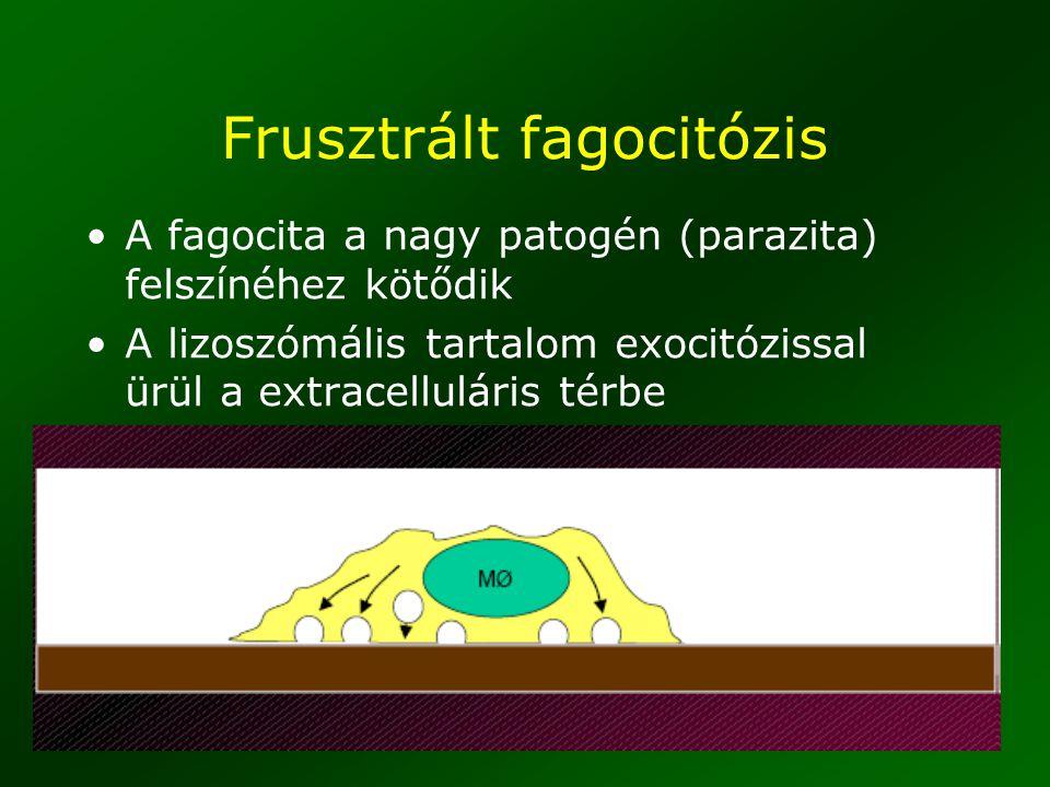 Frusztrált fagocitózis