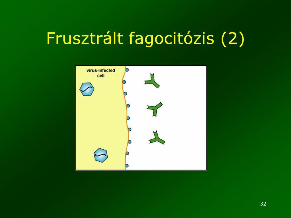 Frusztrált fagocitózis (2)
