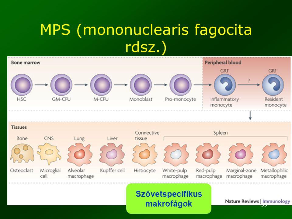 MPS (mononuclearis fagocita rdsz.)