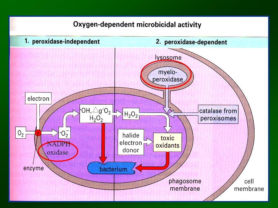 NADPH oxidase