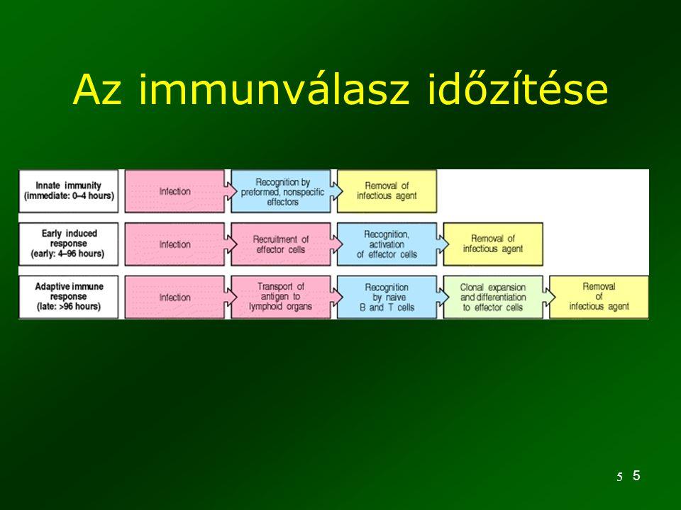 Az immunválasz időzítése