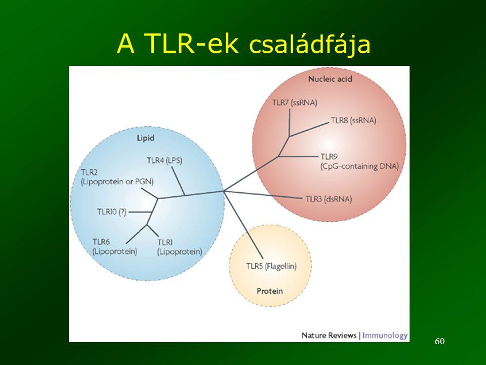 A TLR-ek családfája