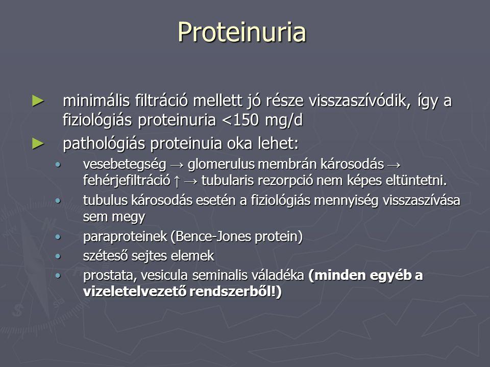 Proteinuria minimális filtráció mellett jó része visszaszívódik, így a fiziológiás proteinuria <150 mg/d.