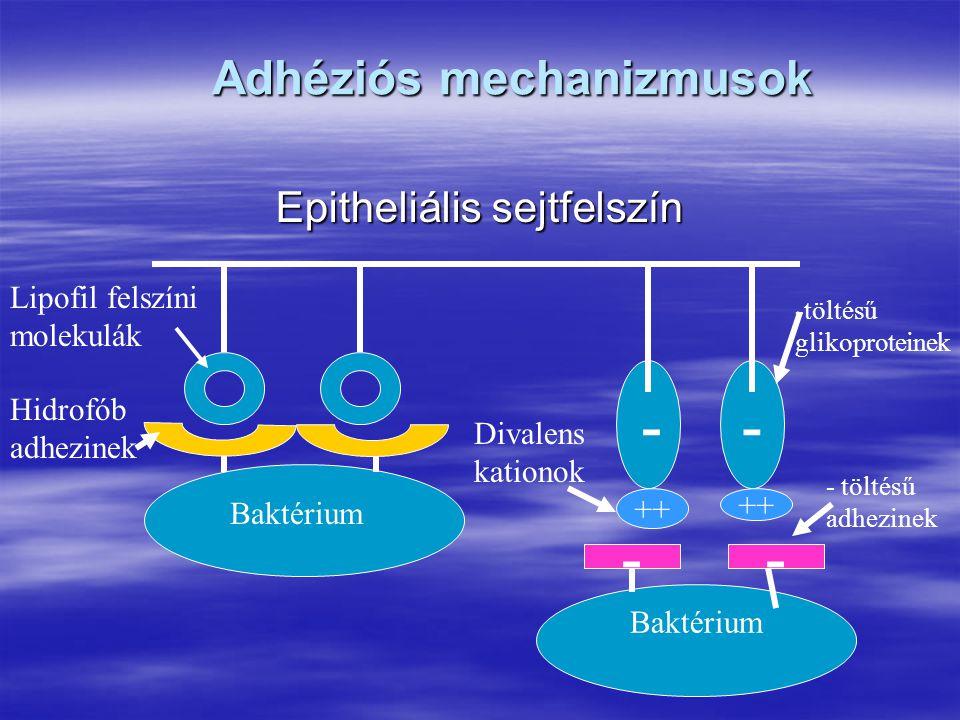 Adhéziós mechanizmusok