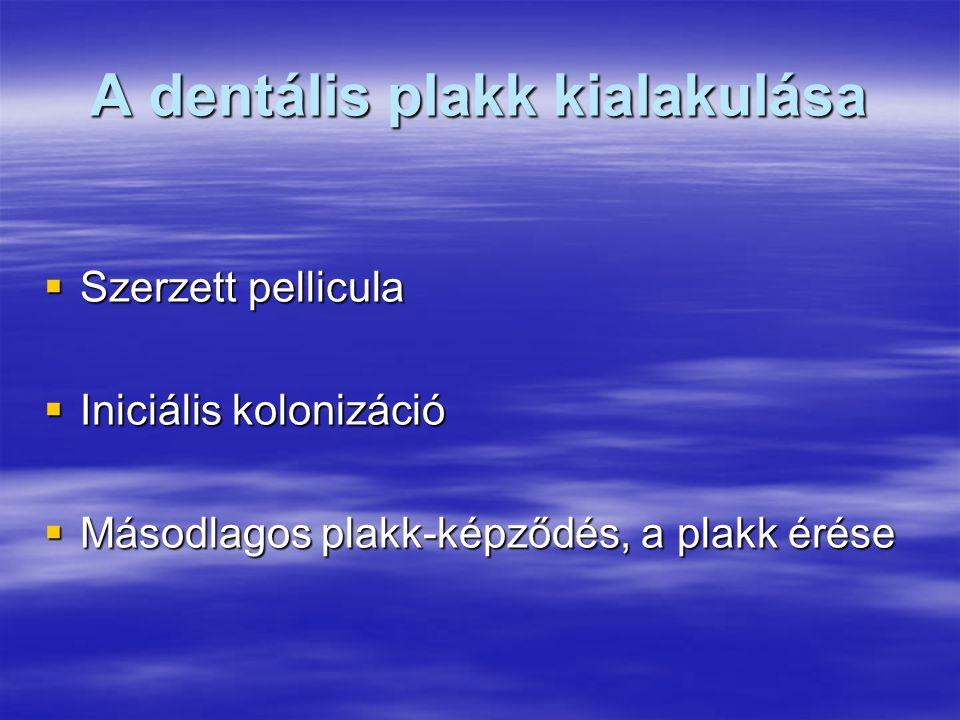 A dentális plakk kialakulása