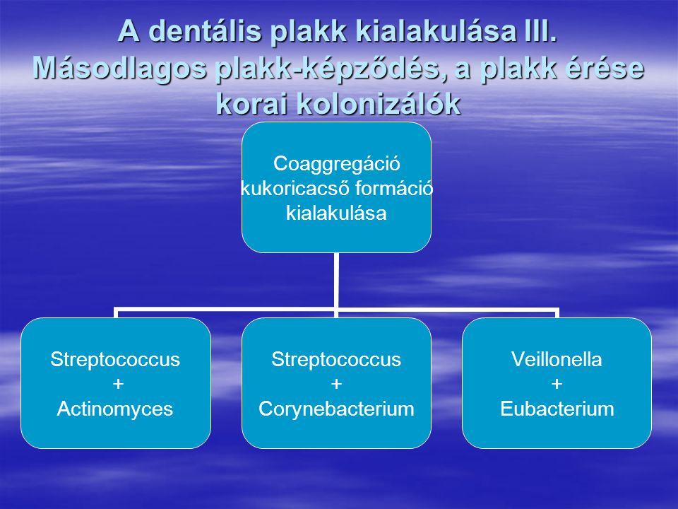 A dentális plakk kialakulása III