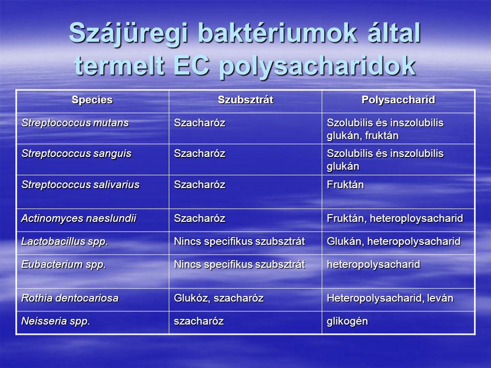 Szájüregi baktériumok által termelt EC polysacharidok