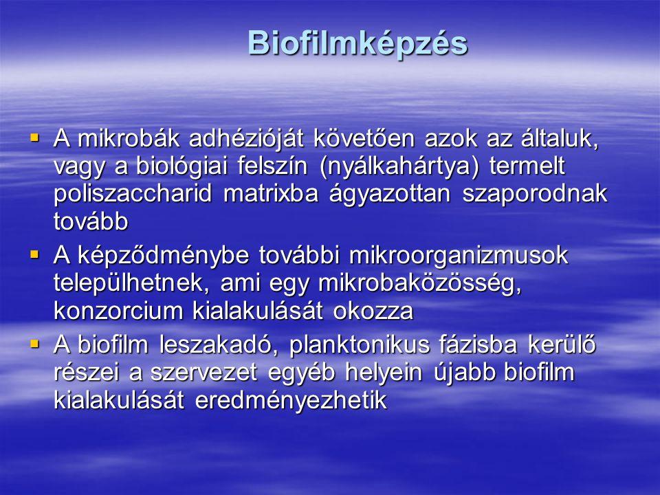 Biofilmképzés