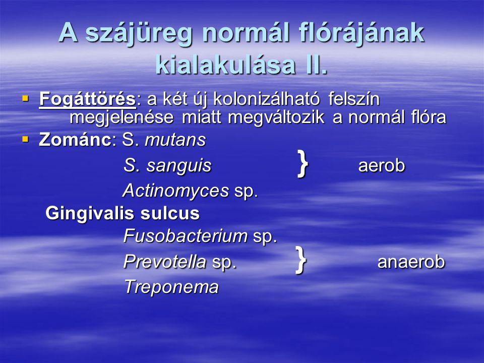 A szájüreg normál flórájának kialakulása II.